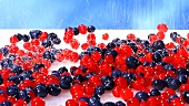 Sprinkling redcurrants and blueberries with sugar