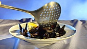 Serving steamed mussels