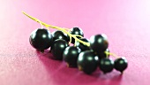 Blackcurrants on purple background