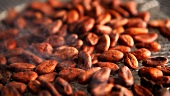 Cocoa beans steaming on a rack (roasting)