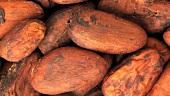 Cocoa beans (full-frame)