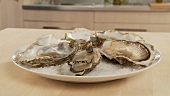 Fresh oysters being on a plate of sea salt