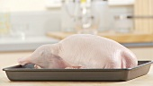 A ready-to-roast duck in a roasting tin