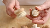 Mushrooms being cleaned with a brush
