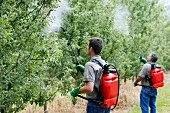 Farmers treating fruit trees with sprayer (Insecticides, Pesticides), Apple trees, Gipuzkoa, Euskadi, Spain