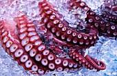 Fangarme eines Kraken eisgegühlt