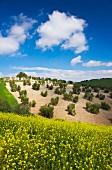 Landscape, Seville, Andalusia, Spain