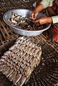 Preparing fish for market, Kompong Phluk, Cambodia