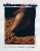 A single Bosc pear on a cloth