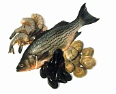 Still life of Trout; Mussels; Clams and Shrimp