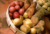 Verschiedene Kartoffelsorten in Körbchen