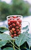 Clear Mug with Coffee Berries