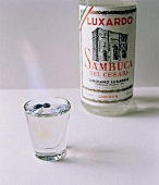 Sambuca in a Glass with the Bottle