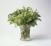 Assorted Herb Bouquet in a Vase