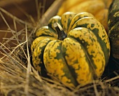 A Carnival Squash on Hay
