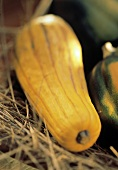 Delicata Squash on Hay