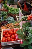 Several Vegetables at the Farmer's Market