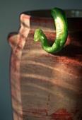 A Long Green Hot Pepper Hanging From a Pot