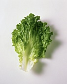 One Romaine Lettuce Leaf
