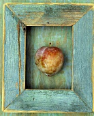 One Plum in a Wood Frame