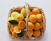 Oranges and Grapefruit in a Basket; Overhead