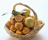 A Basket with Oranges and White Grapefruit