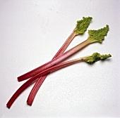 Three Rhubarb Stalks