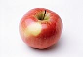 Ein Apfel (Sorte Northern Spy)