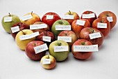 19 Assorted Apples with Labels