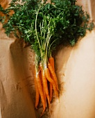 Bunch of Fresh Carrots on Brown Paper