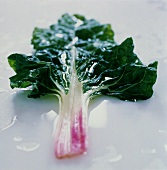 A Leaf of Swiss Chard