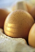 Brown Eggs in the Carton; Close Up