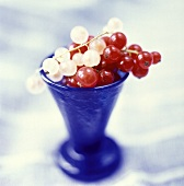 White and Red Currants in Blue Vase