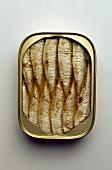 A tin of sardines