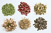 Assorted Legumes and Sprouts