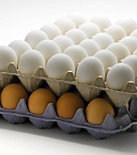 White and Brown Eggs in Trays