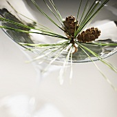 A Martini Close Up with a Sprig of Pine and Mini Pine Cones