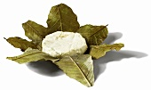 Sheep's cheese in chestnut leaves