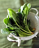 Spinach in an old enamelled colander