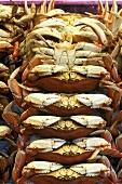 Dungeness Crabs