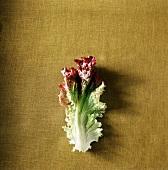 A Red Leaf Lettuce Leaf