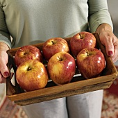 A Woman Holding a Wooden Tray with Fuji Apples