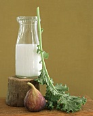 A Bottle of Milk, a Kale Leaf and a Fig