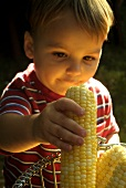 A Little Boy Putting Fresh Corn in a Wire Basket