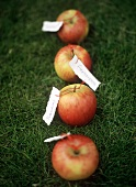 Apples in the Grass with Tags Showing the Days of the Week