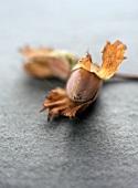A Cob Nut