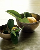 Lemons with Leaves and Buds in Two Bowls