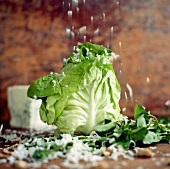 Head of Bibb Lettuce with Cheese Shower; Parmesan and Roquefort