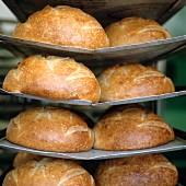 Sauerteigbrote auf einem Gestell in Bäckerei