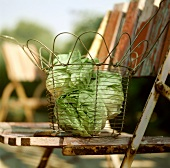 Fresh Heads of Butter Lettuce in a Wire Basket on a Chair